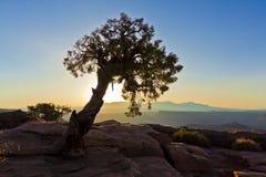 Lone Tree Silhouette Royalty Free Stock Photos