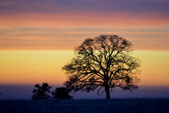 Lone tree silhouette against the layered clouds before sunset. Stock Image