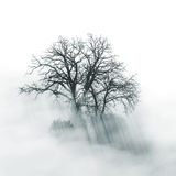 Lone Tree silhouette in foggy morning Stock Images