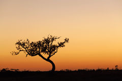 Lone tree silhouette, orange sunset, Australia Royalty Free Stock Images