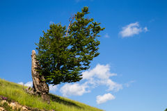 Lone Tree sky Royalty Free Stock Images
