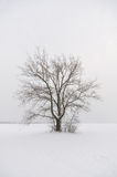 Lone tree in snow Stock Photo