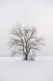 Lone tree in snow Stock Photo