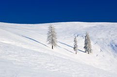 Lone tree in snow-covered valley. The picture was taken in the Ukrainian Carpathian mountains in mid-October royalty free stock images