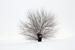 Snowy tree Stock Photography