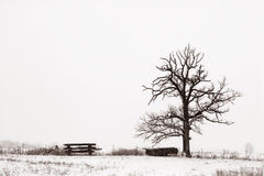 Lone Tree in Snowy Field. A tree alone in  a wintry field, sepai toned.  Illinois, USA Royalty Free Stock Images