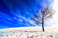 Lone tree on snowy field Royalty Free Stock Images