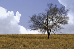 Lone Tree in the Spring Royalty Free Stock Images
