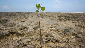 A lone tree sprout among the rocks stock video footage