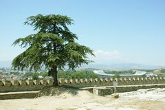 Lone tree, with stadium in background. Skopje, macedonia, brick wall Royalty Free Stock Photo