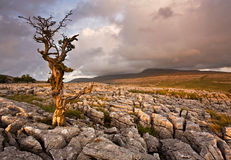 Lone tree standing stock photography
