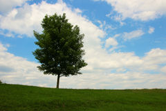 Lone tree standing against a beautiful sky Stock Photo