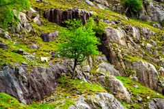 Lone tree standing on rocky hill Stock Photo