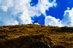 The Lone Tree. This tree stands all alone on an Andean Mountain Royalty Free Stock Images