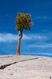 Lone tree on a stone hill Royalty Free Stock Photo
