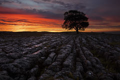 Lone tREE IN sTONE Stock Photography