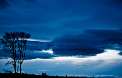 Lone Tree and Storm Stock Photography