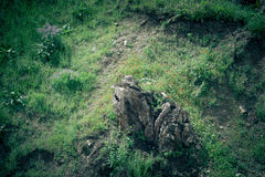 Lone tree stump in the meadow with flowers Stock Images