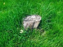 Lone tree stump Stock Images