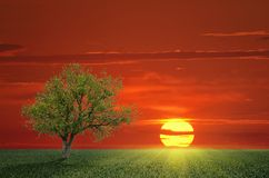 Lone Tree and the sun. Landscape with a lone tree in a field and setting sun Royalty Free Stock Photography