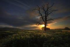 Lone tree sunrise. Langstone, South Wales Stock Photography