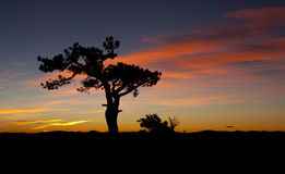 Lone Tree Sunrise Stock Photography
