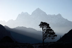 Lone tree at sunrise, Himalayas, Nepal Royalty Free Stock Image