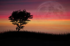 Lone tree at sunset Royalty Free Stock Photo