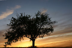 Lone tree at sunset Royalty Free Stock Images