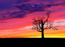 Lone Tree at Sunset. One bare silhouetted tree in an open field during a colorful sunset Royalty Free Stock Images
