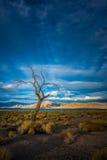 Lone Tree at Sunset Pyramid Lake Stock Photo