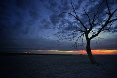 Lone tree and sunset Stock Images