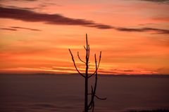 A lone tree at sunset