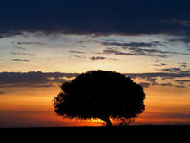 Lone tree at sunset Stock Photos