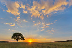 Lone tree at sunset Stock Photography
