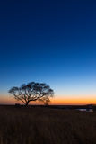 Lone Tree Sunset Vertical Royalty Free Stock Image