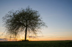 Lone tree at sunset Stock Photo