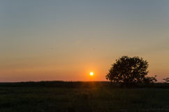 Lone tree at sunset Stock Images