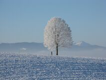 Lone Tree Surrounded by Snowcap Mountain Under Blue Sky Royalty Free Stock Photo