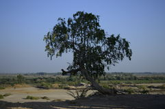 A lone tree surviving the wilderness. Royalty Free Stock Photo