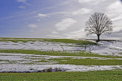 Lone tree in thaw period Royalty Free Stock Image