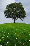 A lone tree on a top of a green hill Royalty Free Stock Photos