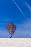 Lone Tree on top of The Hill. Lone tree in winter on top of the hill with blue sky and chem trail royalty free stock image