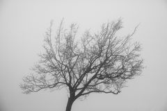Lone tree on top of a mountain. Royalty Free Stock Photo