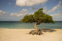 Lone Tree. On a tranquil beach Royalty Free Stock Photo