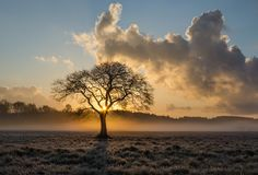 Lone Tree, Tree, Oak, Clouds Royalty Free Stock Photo