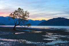 The lone tree twilight Stock Images