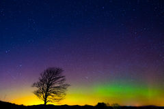 Lone Tree under Aurora Borealis. A lone tree stands under the Northern Lights (Aurora Borealis) and a star filled night sky in a field near the town of Barre Stock Photography