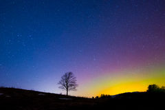 Lone Tree under Aurora Borealis. A lone tree stands under the Northern Lights (Aurora Borealis) and a star filled night sky in a field near the town of Barre Stock Image