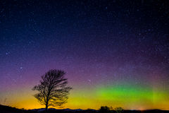 Lone Tree under Aurora Borealis. A lone tree stands under the Northern Lights (Aurora Borealis) and a star filled night sky in a field near the town of Royalty Free Stock Photography